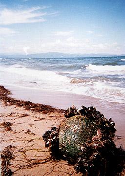 Herb S An Beach